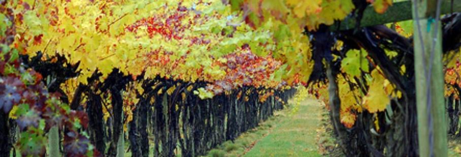 Wine & Tourism